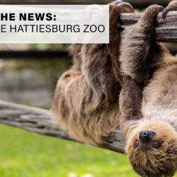 Sloths at the Hattiesburg Zoo