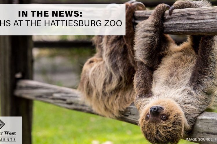 In the News: Sloths at the Hattiesburg Zoo