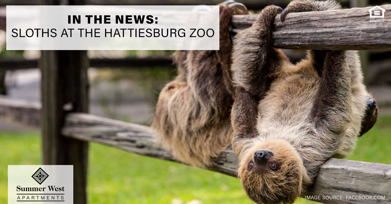 Sloths at the Hattiesburg Zoo