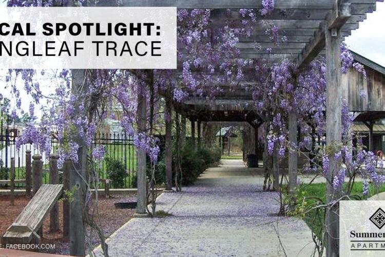 Local Spotlight: Longleaf Trace