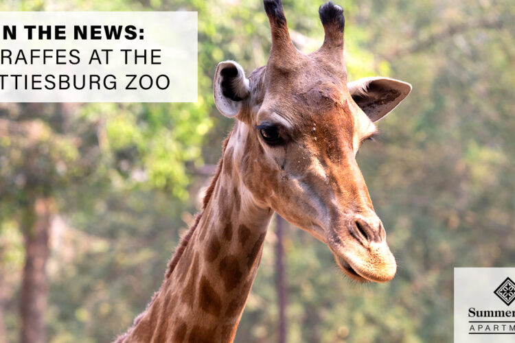In the News: Giraffes at the Hattiesburg Zoo